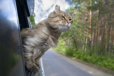 Auto cat loaded automatically